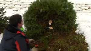 Vermont Christmas Tree Shoppers Get Horse, Segway Assist