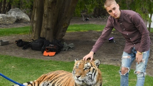 PETA Slams Justin Bieber for Posing With Tiger