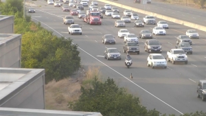 Fowl on the Freeway: Goose Slows Down Bay Area Commutes