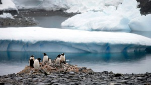 Airbnb Offering All-Expense-Paid Trip to Antarctica for Science Research
