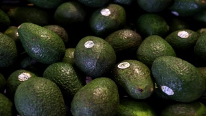 Are You Obsessed With Avocados? Then Visit The Cado Museum