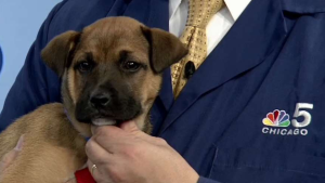 Clear the Shelters: Saturday Dec. 15, 2018