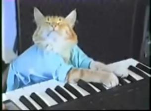 What the Keyboard Cat Has to Teach About Lawsuits