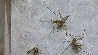 Cook County West Nile Cases Increasing