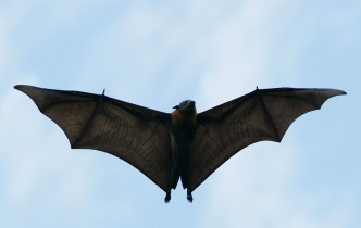 Bat Population in Illinois on The Rise, Experts Say