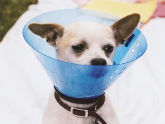 Dogs and Cats: The Fix is In