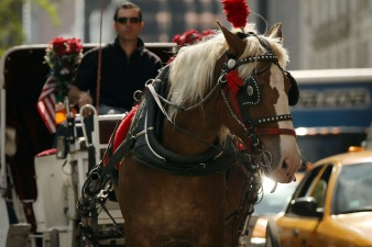 Chicago Alderman Proposes Ban on Horse-Drawn Carriages