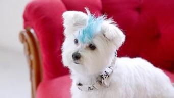 Cooper on Dogs of Instagram