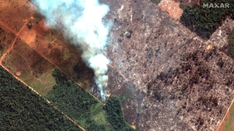 Global Worry Over Amazon Rainforest Fires Escalates
