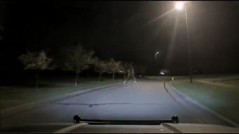 The Buck Stops Here: Feuding Deer Caught on Camera