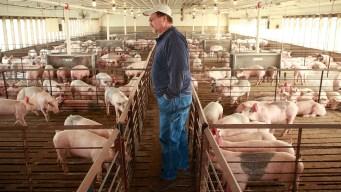 Mexico to Impose Steep Retaliatory Tariff on US Pork