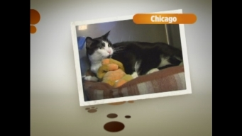 "Pet Adoptions: ""Chicago"""