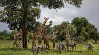 1 Million Species Face Human-Caused Extinction: UN Report