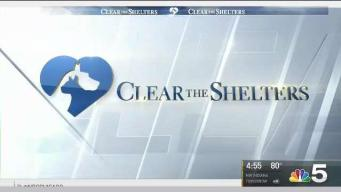 Clear the Shelters: For Paws Sake Rescue