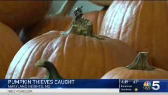 Teens Caught With 49 Stolen Pumpkins in Car, Police Say