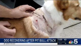 Owners Want Answers After River North Dog Attack