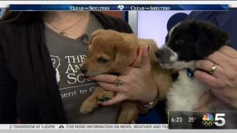 Clear The Shelters: Saturday, Jan. 20, 2018