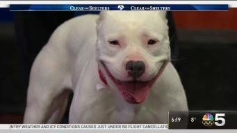 Clear The Shelters: Saturday, Jan. 13, 2018