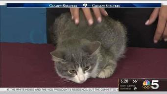 Clear The Shelters: Saturday, Sept. 16, 2017