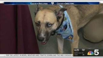 Clear the Shelters: Sunday, July 16, 2017