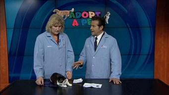 Adopt a Pet: October 6