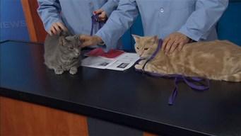 Adopt a Pet: Oct. 12