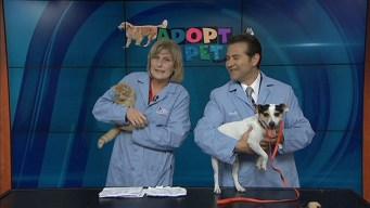 Adopt A Pet: October 26