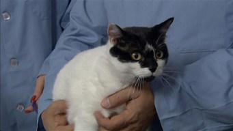 Adopt a Pet: October 27