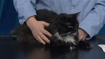 Adopt a Pet: January 11