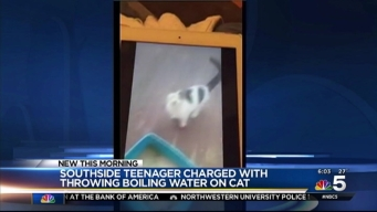 Teen Charged After Pouring Boiling Water on Cat in Facebook Video