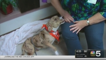 Thousands of Animals Find Homes in 2016 Clear the Shelters