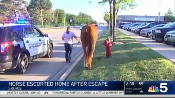 Horse Gallops to Mall After Escaping Stable