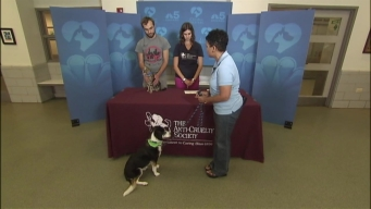 Clear the Shelters: Sunday, September 25, 2016
