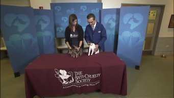 Clear the Shelters: Saturday, November 26, 2016