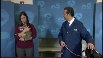 Clear the Shelters: Saturday, January 21, 2017