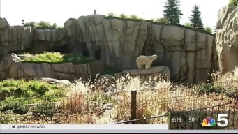 Lincoln Park Zoo Unveils New National Conservation Efforts