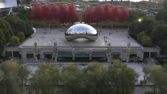 A Gorgeous Look at the Bean in the Fall