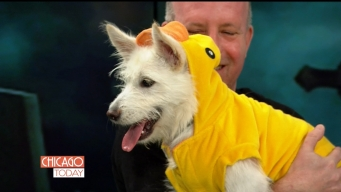 Shelter Dogs Dress Up for Spooky Pooch Parade