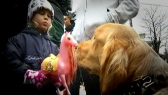 Chicago Comfort Dogs Assist in Newtown