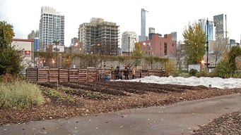 Urban Farm Growing Opportunities for Those in Poverty