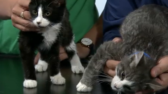 Clear the Shelters: Saturday July 13, 2019