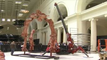 Chicago's Field Museum Acquires New Dino