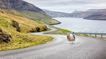 Missing Google Street View, Faroe Islands Get 'Sheep View'