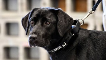 Rookie Bomb-Sniffing Dog at Midway Has Pooping Problem