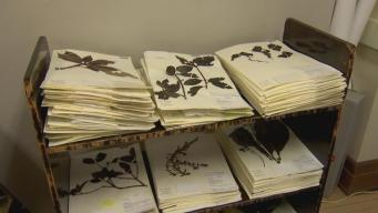 Museum Seeks Volunteers for Remarkable Cataloging Mission