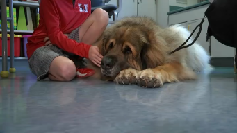 How Therapy Dogs Help Sick Kids at Illinois Hospital