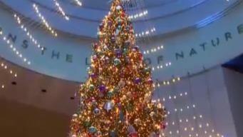 Museum of Science and Industry Lights Up Tree