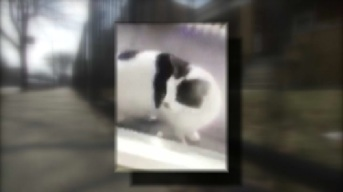 Rescue Groups Search for Cat in 'Disturbing' Boiling Water Video