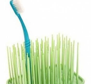 Grassy Green Toothbrush Holder