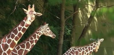 Zoo Celebrates Earth Day with Special Events